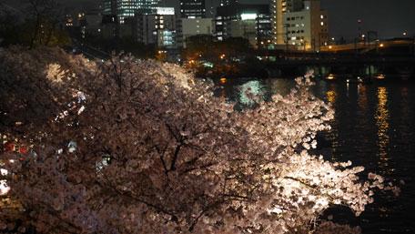 造幣局 夜桜